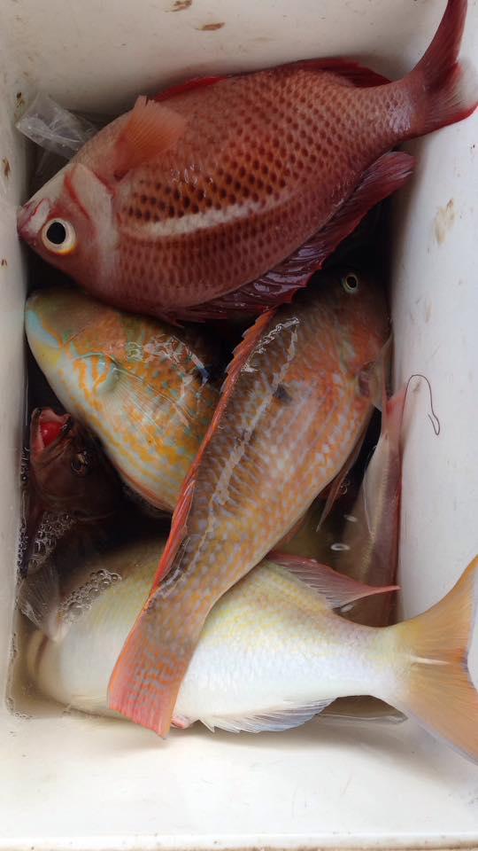 Ikan hasil pancingan di rakit Piayu Laut