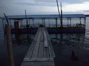 Pelantar akses menuju rakit Pak Lim di Piayu Laut