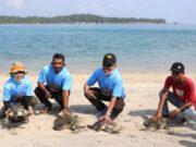 Konservasi Penyu Pulau Karas