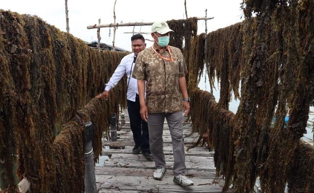 DKP Kepri Kembangkan Rumput Laut