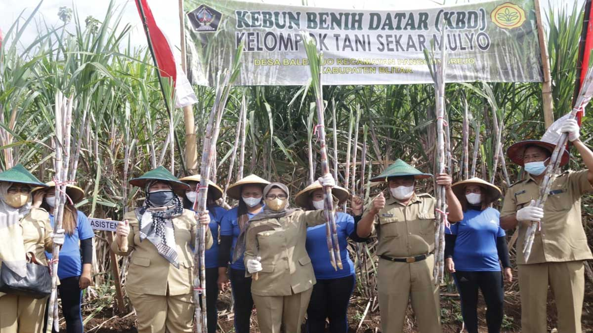 Bupati Blitar Launching Panen Raya Tebu